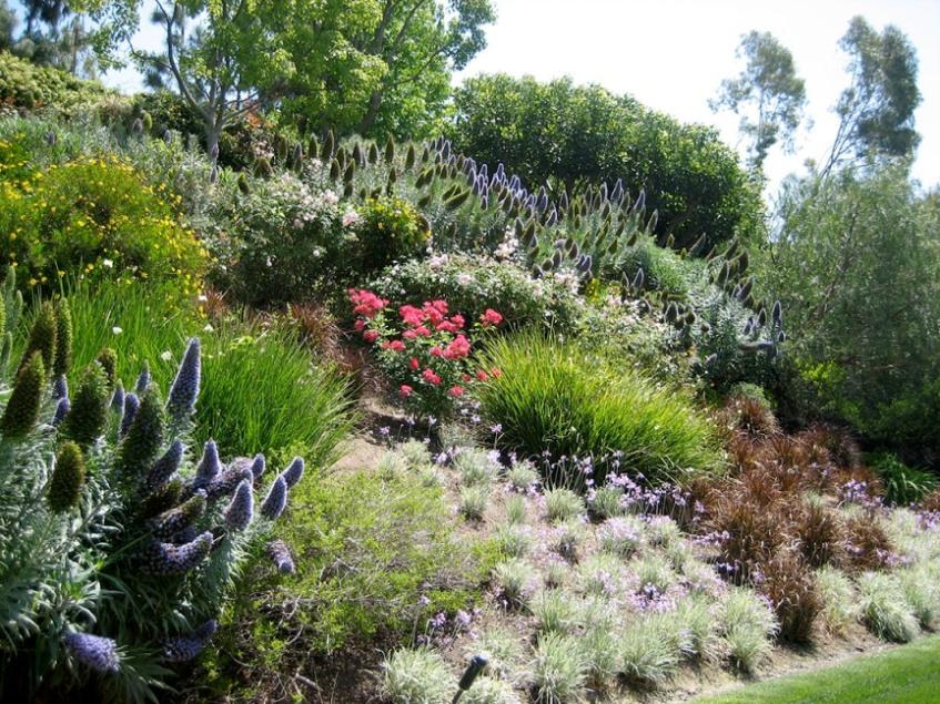 plante jardin en pente